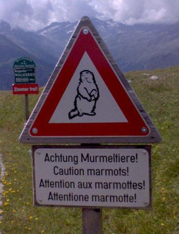 Precaución ¡marmotas!